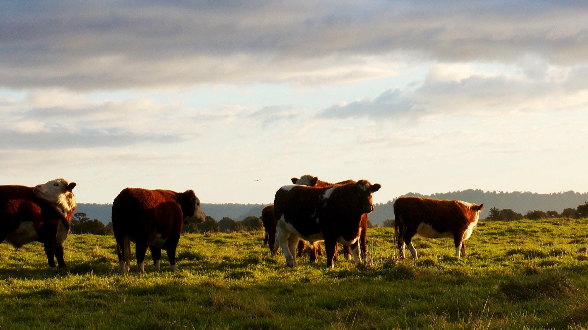 imagem da IoT para alavancar o agronegócio e alimentar o mundo